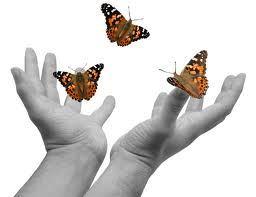 butterflyrelease.jpg